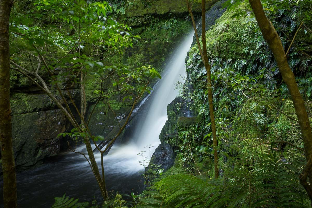 20150212-DSC03597 McLean Falls